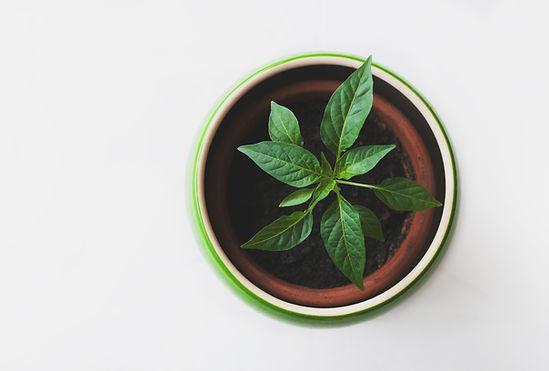 Planta em um vaso