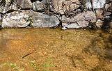Le petit bassin - La pequena cuenca.jpg