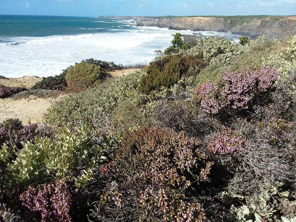 Coastal walk vegitation