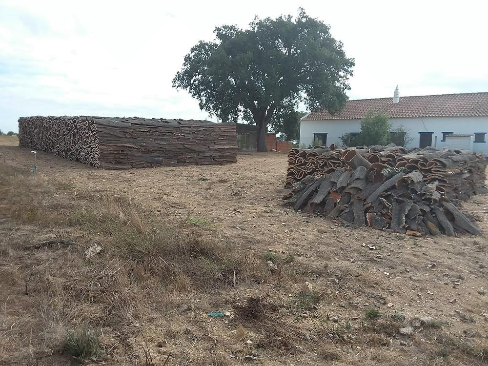 Cork oak bark stacked for drying