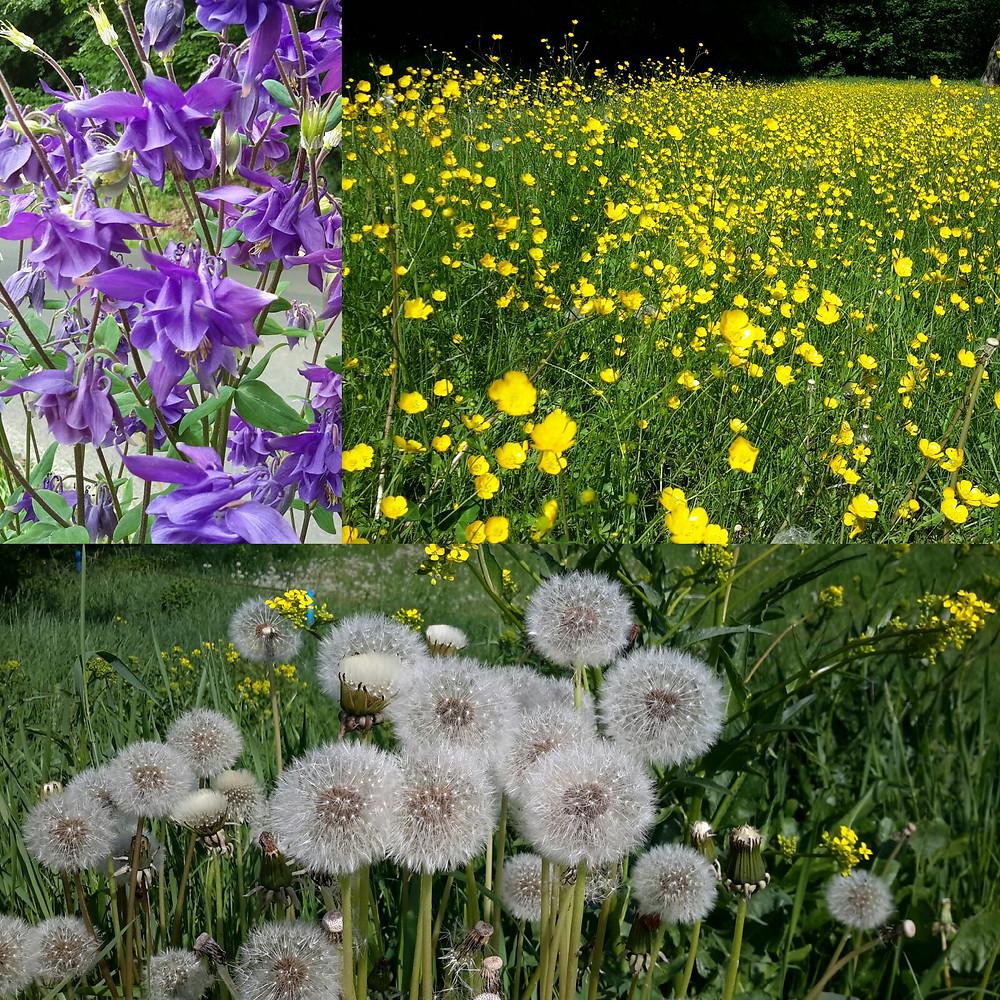 Delphiniums, buttercups, and dandelions