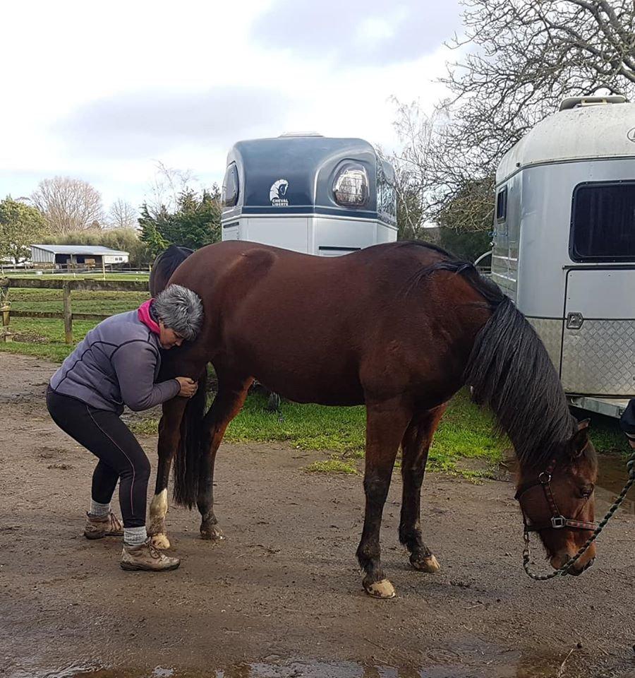 Equine Treatment