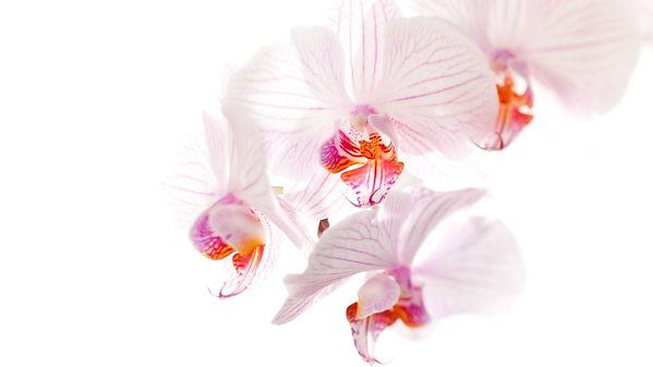 Orquídeas-y-sus-polinizadores-Programa-