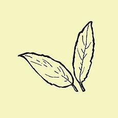 leaves_yellow.jpg