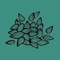 Copy of seeds_BG.jpg