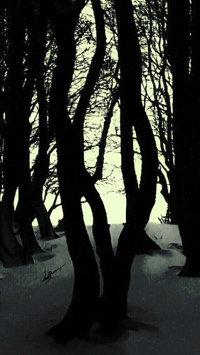 Forêt vierge