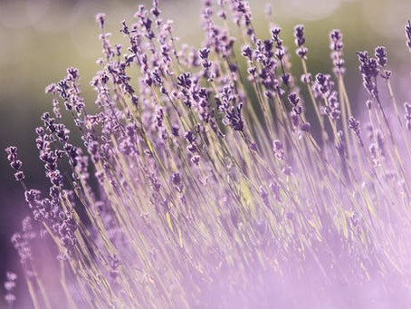 What are the benefits of Lavender essential oil?