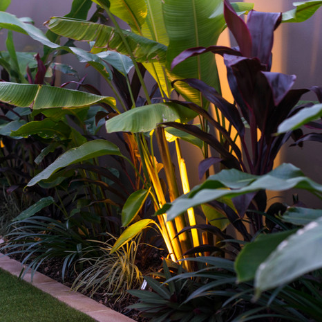 Tropical plantings provide a feast of textures and colours.