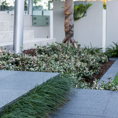 Underplanting can be used to soften hardscapes.