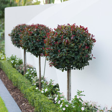 We use our horticultural expertise in plant selection.