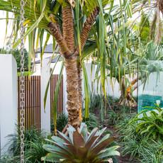 Pandanas palms help to evoke resort-inspired living at home.