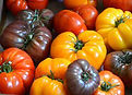 heirloom tomato.jpg