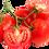 Thumbnail: Tomate  Kg