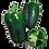 Thumbnail: Pimentão Verde Kg