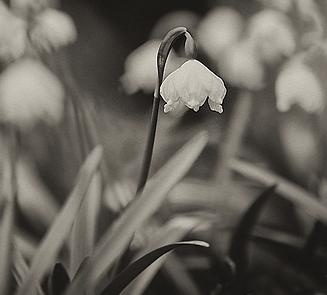 Spring-2-20.png