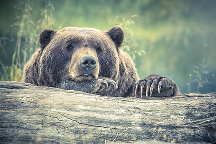 animal-animal-photography-bear-213988.jp