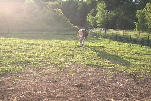Timothy pasture.jpeg