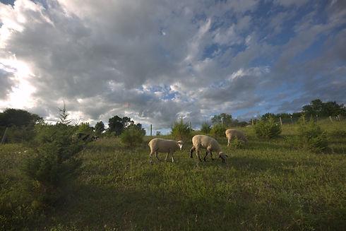 Sheep Pasture.jpeg