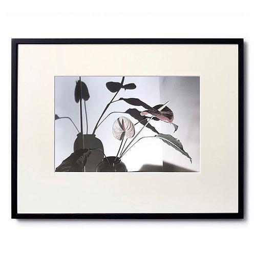 Marc LE MENE/Flower05