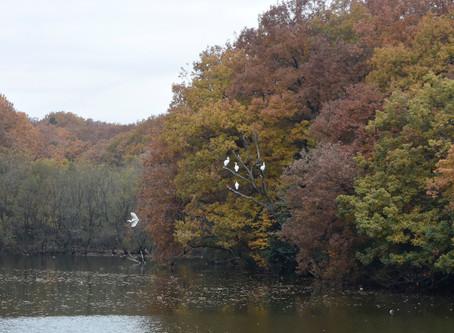 森林公園の鶴か鷺か?