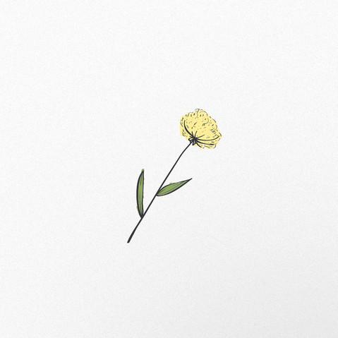 flor-04.jpg