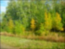 Башмачинский лес