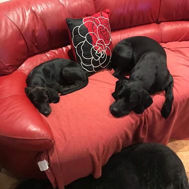 Lexi on sofa.jpg