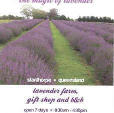 Aloomba Lavender Farm.jpg