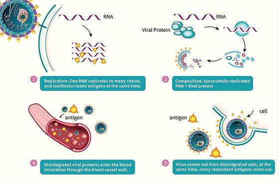 antigen kits and antigen working