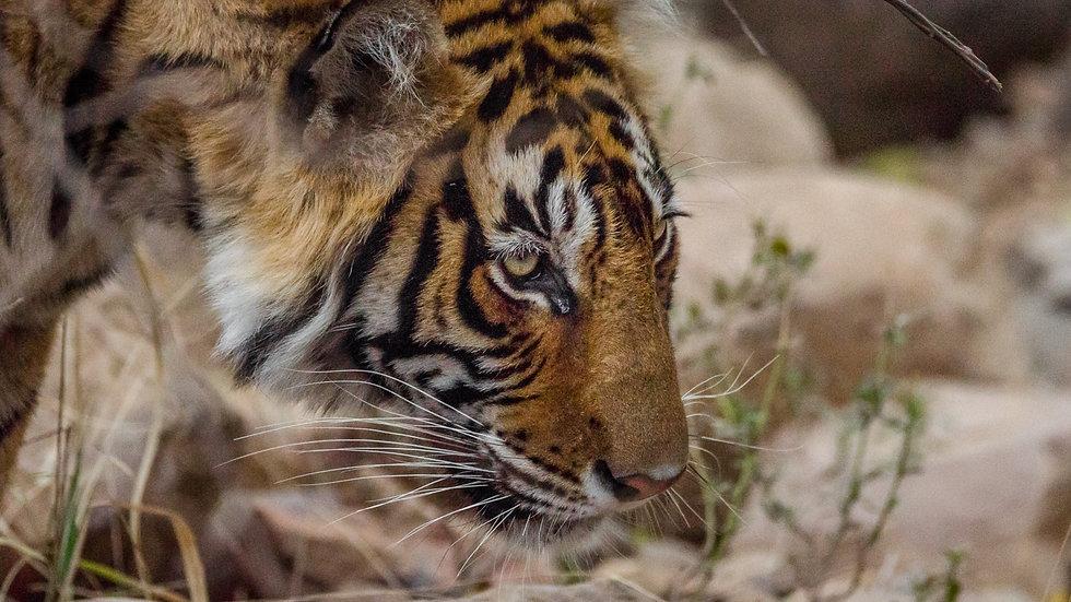 Duma Safaris India Tour-89_edited.jpg