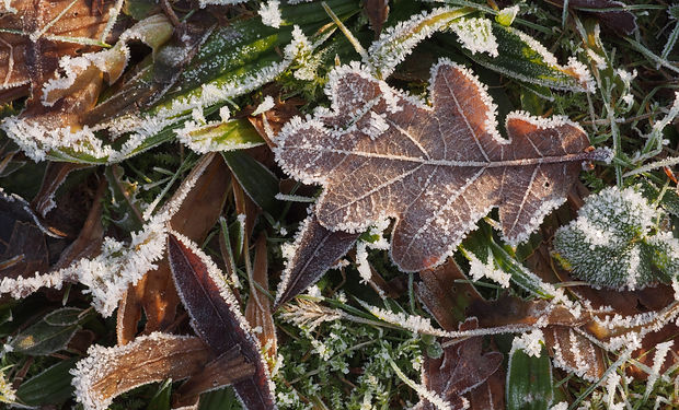 frozen-leaves-and-grass.jpg