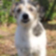 happy dog for slideshow.jpg