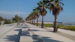 Palms at the sea promenade