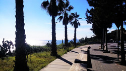 Skyline + palms