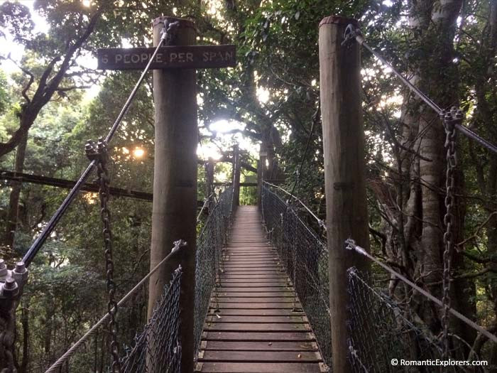 A romantic escape to O'Reilly's includes tree top walks for free