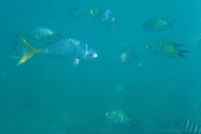 Photo of some fish we saw while snorkeling at Chalkies Beach
