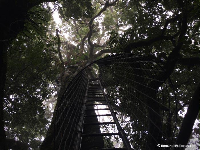 Romantic hidden gem in the rainforest of O'Reilly's Rainforest Retreat