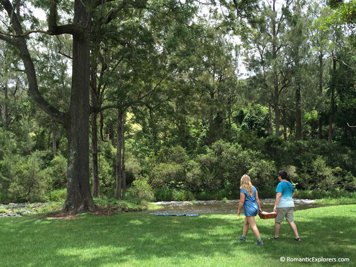 Romantic picnic in the Romantic stroll in the O'Reilly's Canungra Valley Vineyards