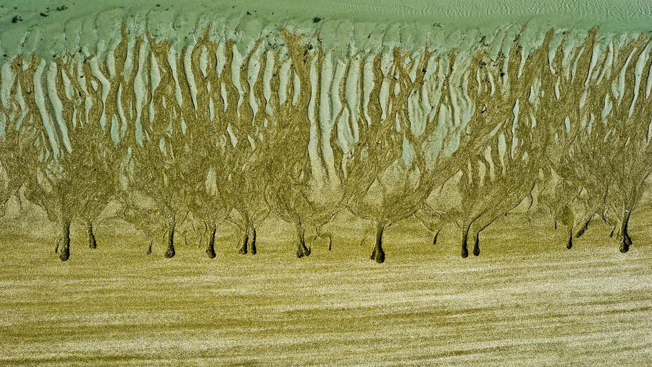 Sand forest