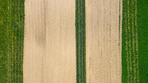 Field in Belle-Ile-en-Mer