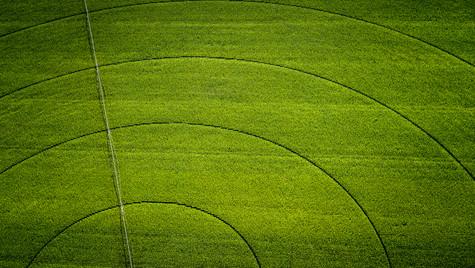 Circle Field N°1