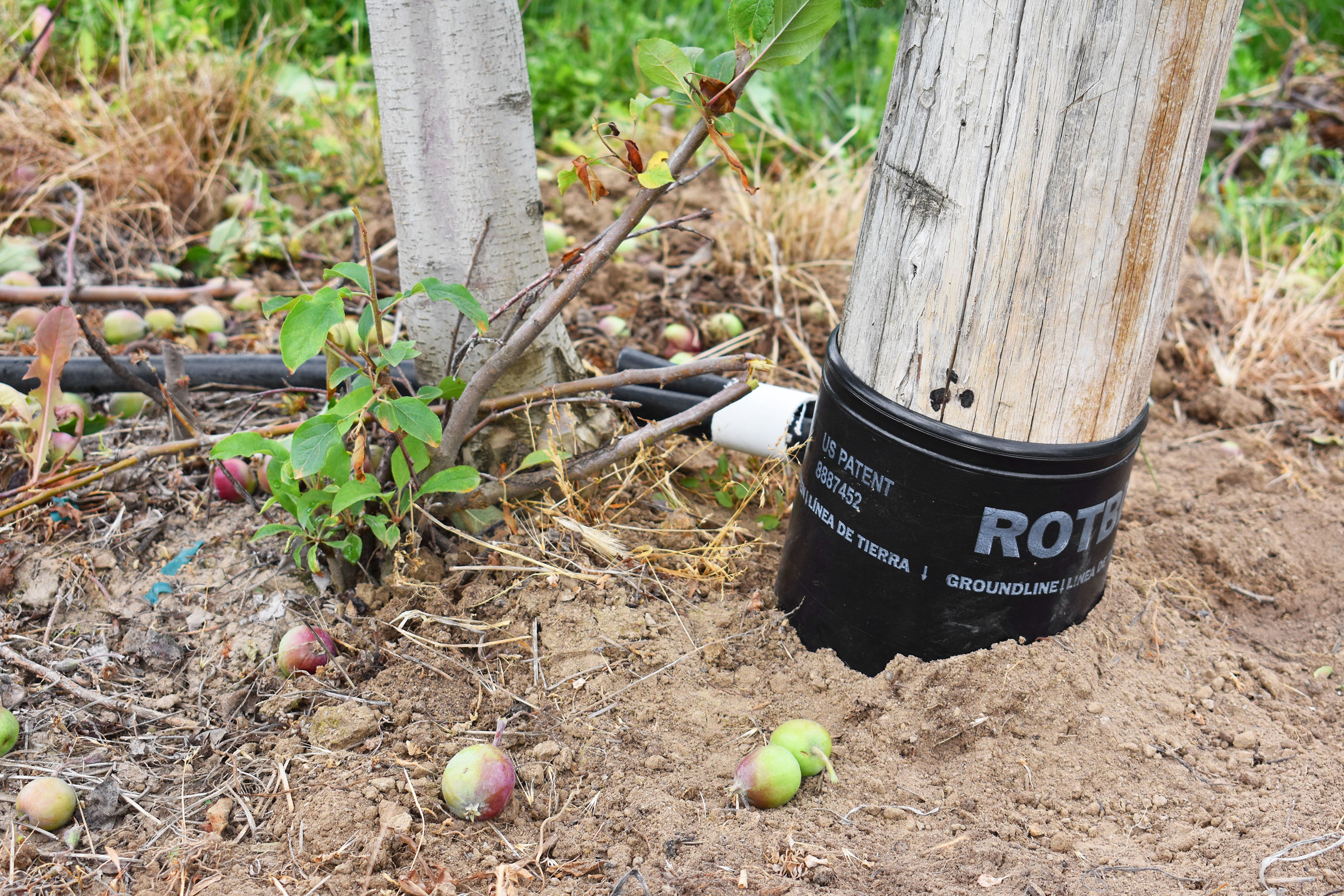 rotbloc orchard patent
