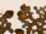 BioVer_plasmodium