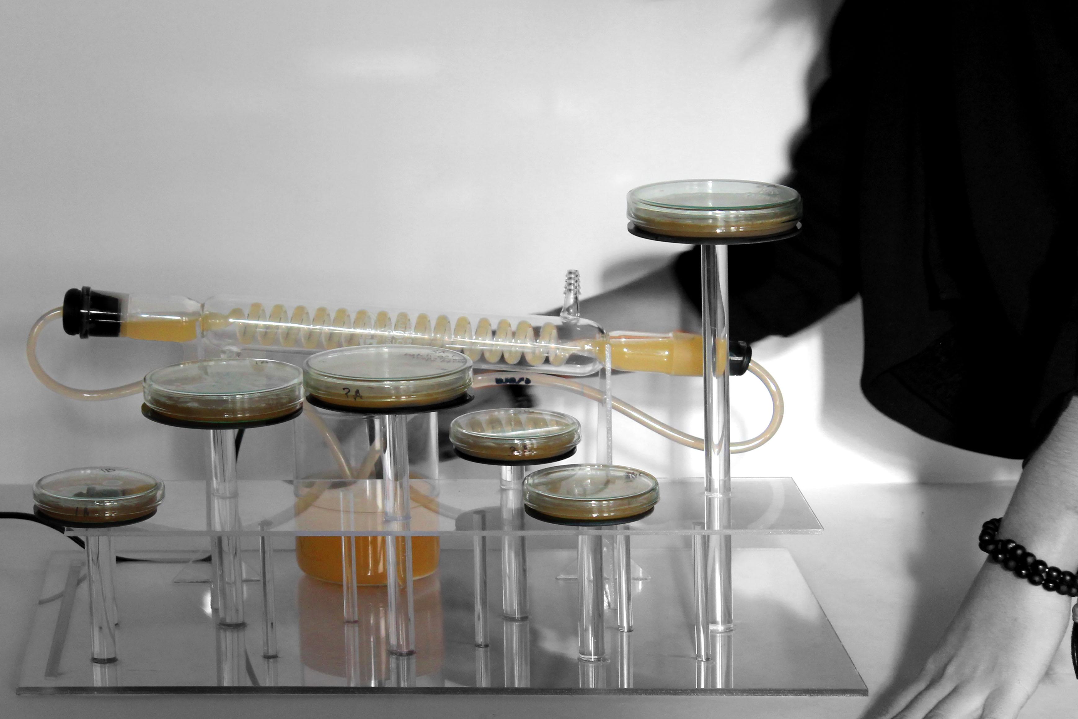Bacteria Setup