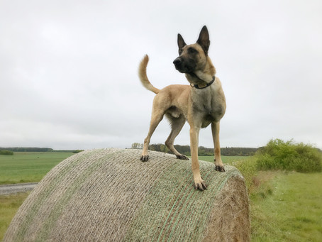 Rettungshundetraining Workshop
