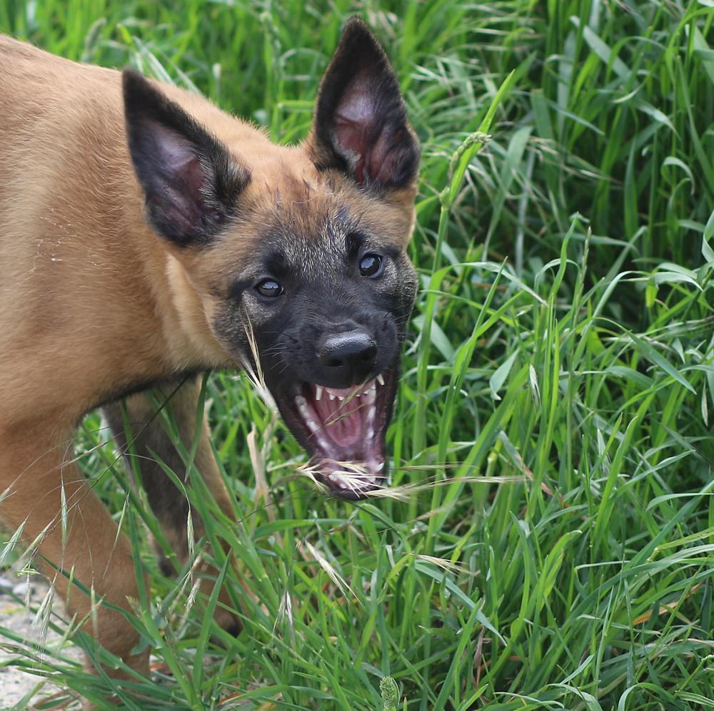Wenn Sie einen lieben Hund möchten, beginnen Sie direkt ab Welpe.Beginn 4.07.19 jeweils Donnerstags um 18.00 Uhr