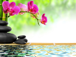 imagem zen site
