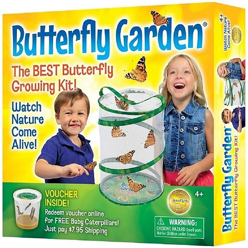 Insect Lore - BH Butterfly Growing Kit - With Voucher to Redeem Caterpillars Lat