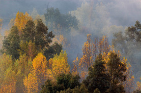 Autumal colours of El Valle del Guadiaro