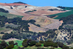 Andalucian countryside and farmland